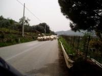 Foto SicilyExcursions - 49